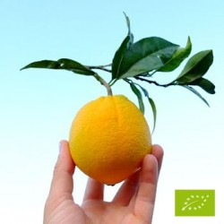 Oranges Lane Late – 7kg –...